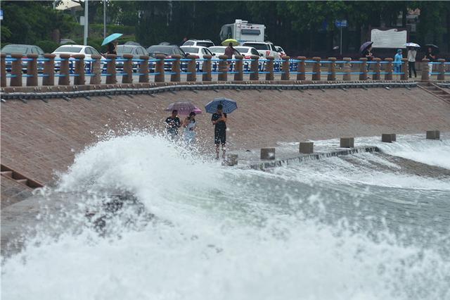 游客撑伞在海边观潮捡海带
