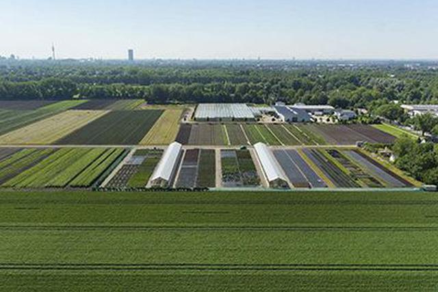 山东划定粮食生产功能区 创建4个现代农业产业园