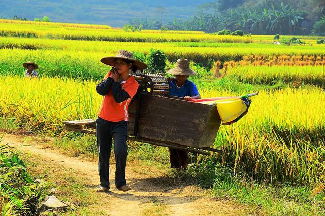 山东每天上阵农机150万台促三秋生产 多举措做好农机管理服务