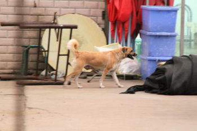 杭州治理违规养犬 不定时检查 双休日开放办犬证