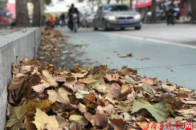 降温了 一夜之间竟落了这么多树叶