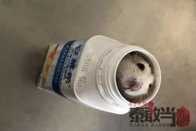 戏精 泰安一学生为让仓鼠上高铁 竟将它们塞入饮料瓶