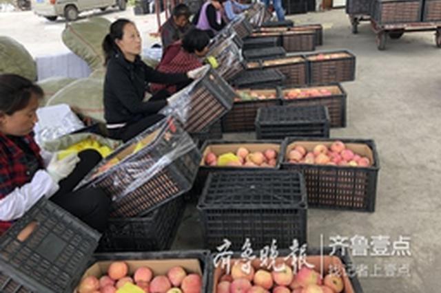 深壹度 从产区到市场 山东苹果是如何一路蹿红的