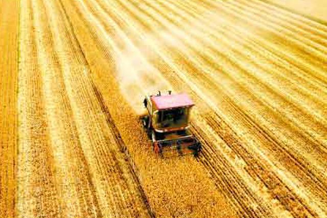 山东麦收基本结束  6000多万亩夏粮颗粒归仓