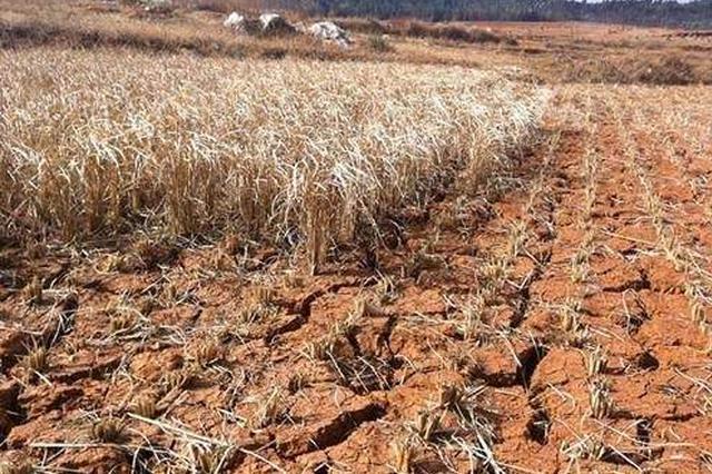 今年以来山东降水量较常年偏少37% 部分地区旱情较重