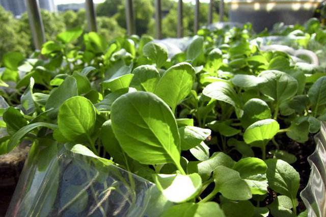 供应充足 交易量增加 山东寿光菜价持续稳定