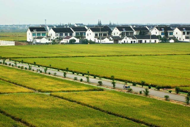 推进乡村振兴新型城镇化 山东双轮驱动加快城乡发展