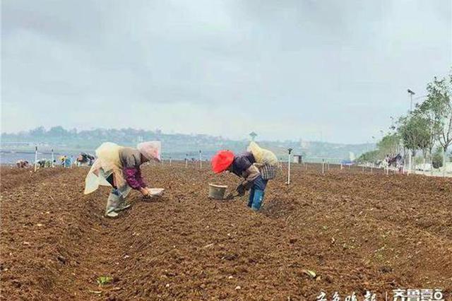 以前贵州高田村人均年收入不到3000元 青岛帮扶后 如今过万