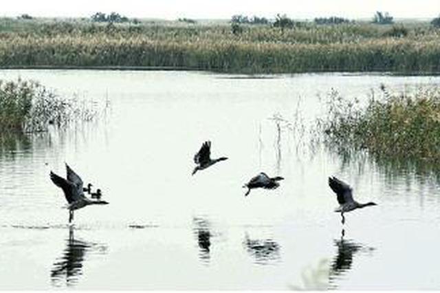 扬起黄河流域生态保护和高质量发展龙头