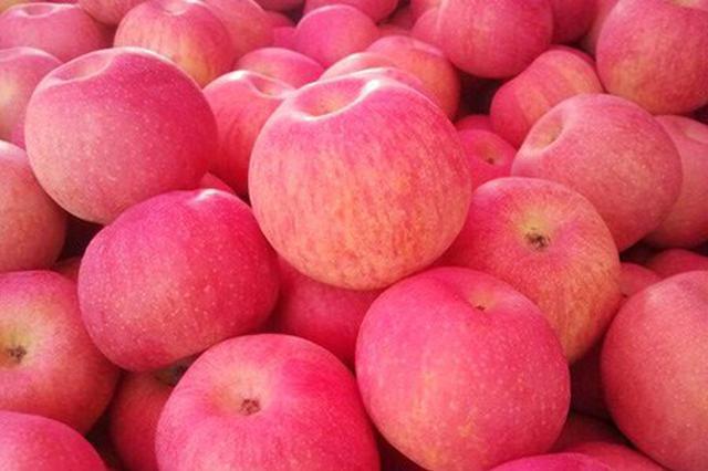 """山东烟台推动苹果产业供给侧改革 促""""提质增效"""""""