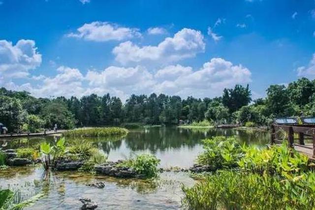 济宁湿地面积15.88万公顷 国际湿地城市认证通过国家评审