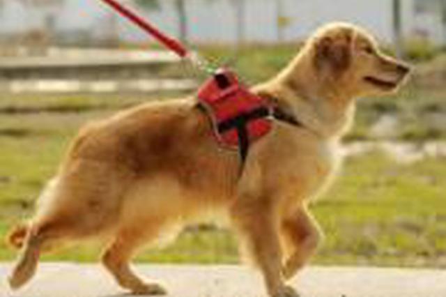 淄博将立法规范养犬行为向社会公开征求意见