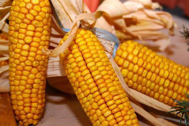 秋糧(liang)gan)展河行蚪全省(sheng)收購玉米(mi)745萬噸