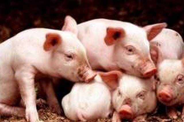 山东生猪企业获贷款贴息2700万元 撬动全省银行贷款34.46亿元