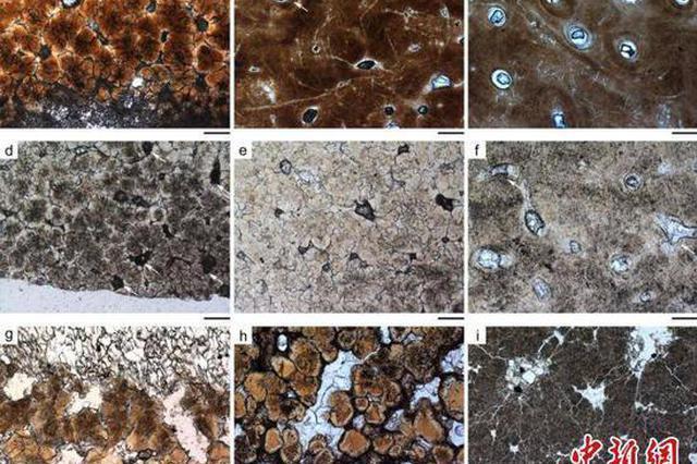 山东莱阳等地发现的约8000万年前的碎蛋壳 可能是恐龙蛋