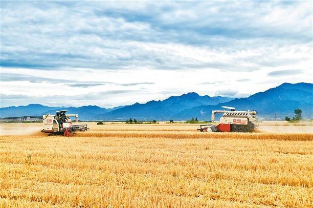 山东小麦收获已过半