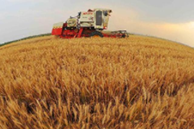 山东小麦收获已过半:全省小麦已收3308.3万亩