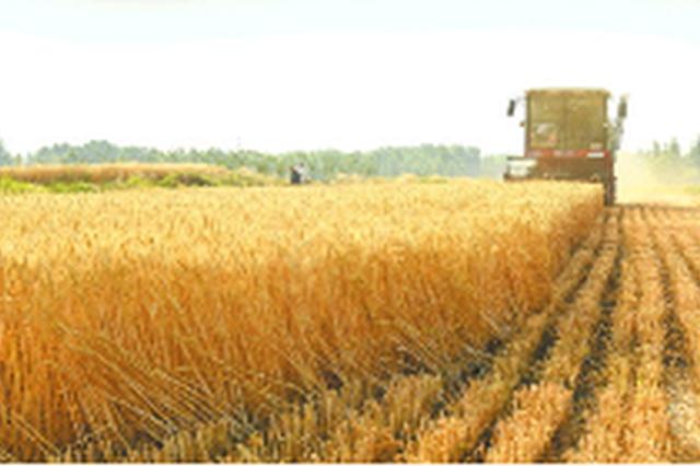 山东麦收近九成 5市已收获结束