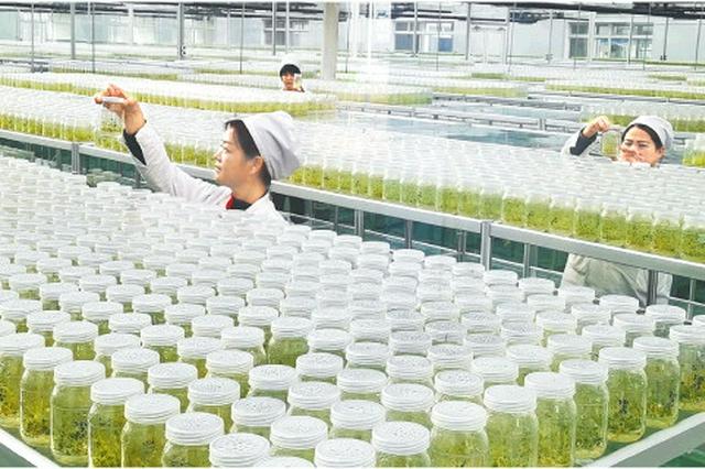 山东良种打开农业创新发展新空间