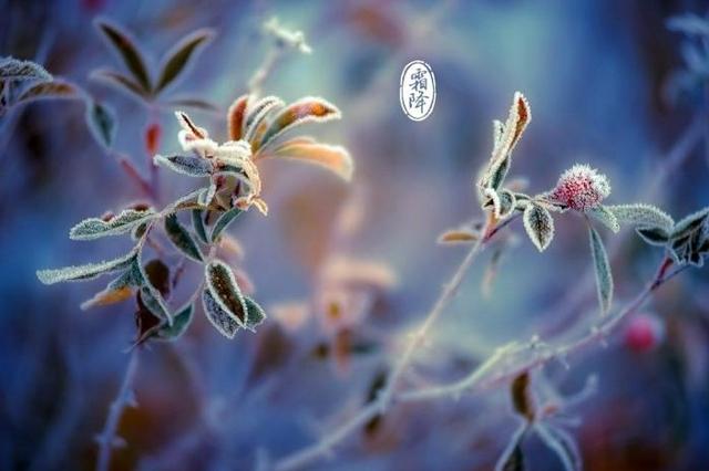 霜降警惕初霜冻 未来几天济南天气晴为主 气温奔向20℃