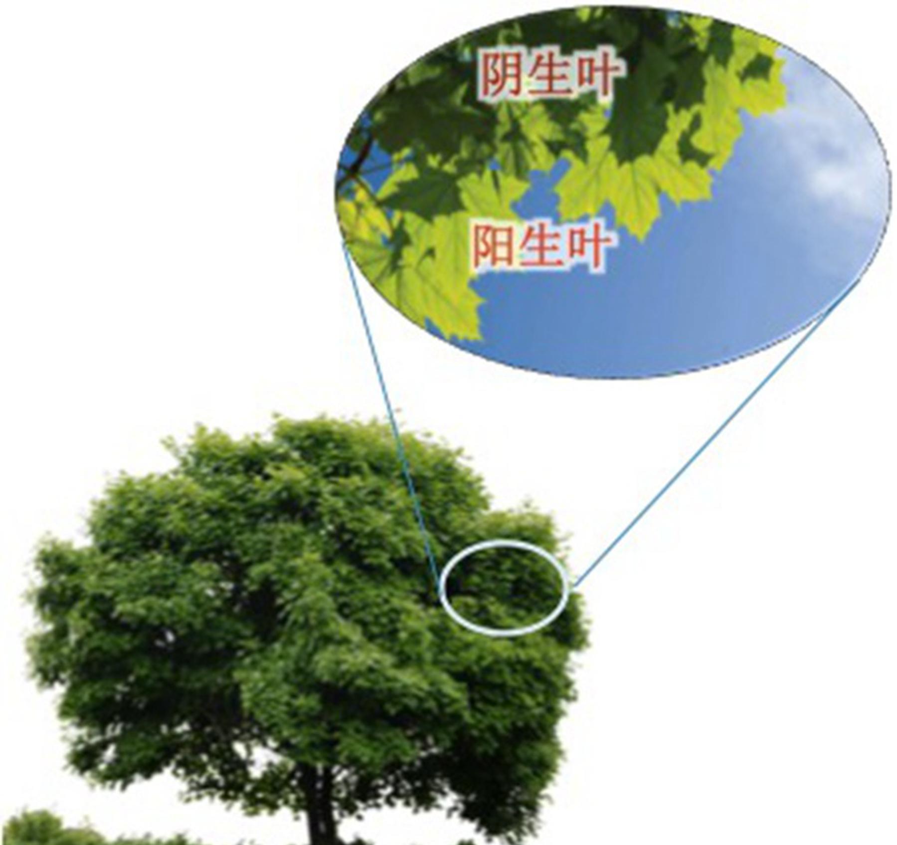中国学者最新研究成果:雾霾越严重 森林长得越快