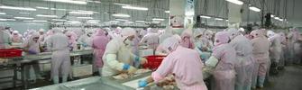 济宁畜牧产品有序生产保障市场供应