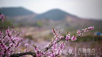世外桃源--——威海文登谭家口万亩桃花