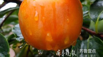 秋天的流行色 有一种红叫柿子红