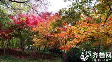 秋去冬来 泉城公园更加绚丽多彩