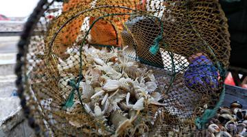 初冬鱼虾蟹大量上岸 这鱼单条能卖400