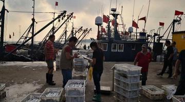 来解馋 清晨的繁忙海港 大鲅鱼半米多长
