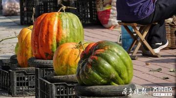 南部山区农贸市场 一个老农摆出的南瓜又大又鲜艳