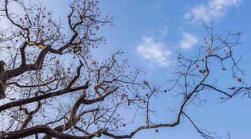 山东潍坊:初冬山乡景如画