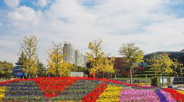 山东胶州:三里河公园秋色美