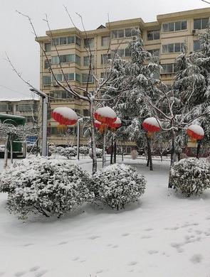 山东烟台迎来降雪 市民冒雪出行