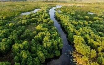 滨州小开河获批国家级湿地公园试点