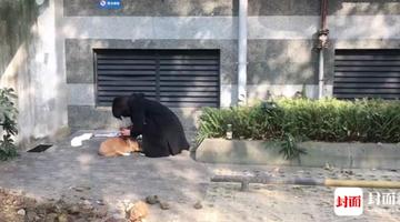 索酬不成 捡养人把狗摔下楼致死