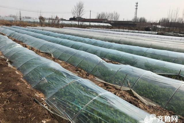 全国第一 山东安丘全流程管控蔬菜产品 出口50多个国家和地区