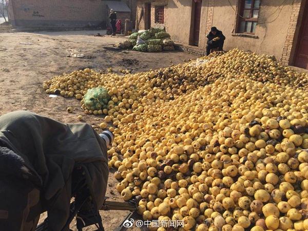 老翁卖梨320斤酥梨卖10块