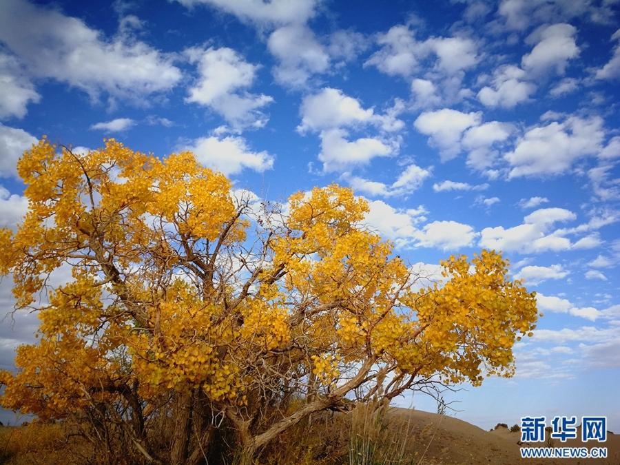 日里风光旖旎的格尔木胡杨林. 格尔木胡杨林,位于青海省海西蒙古