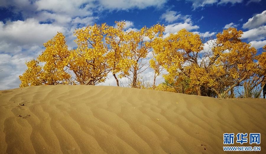 格尔木胡杨林,位于青海省海西蒙古族藏族自治州格尔木市以西50