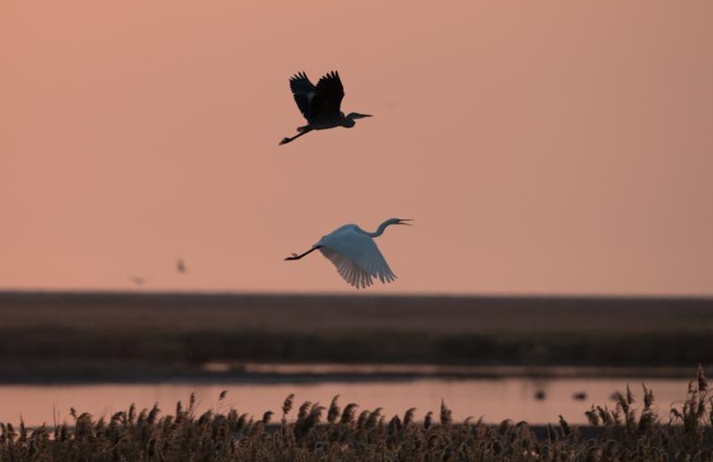 杭州野鸭鸳鸯结伴游西湖