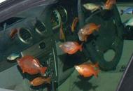 汽车如何变鱼缸