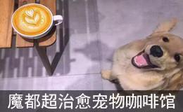 魔都超治愈的宠物咖啡馆 给你春日别样温暖