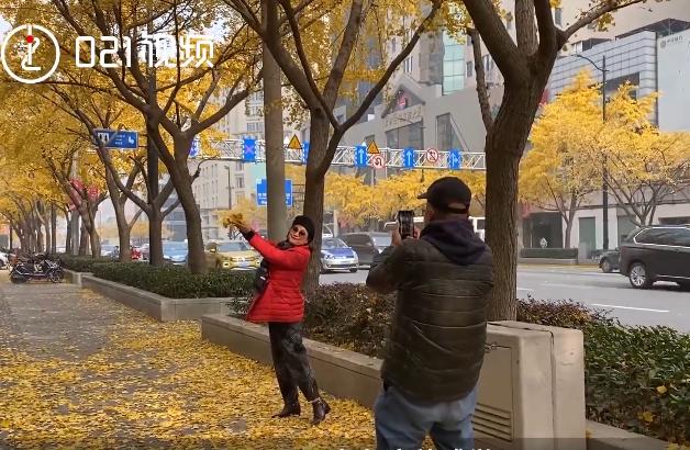 上海最美银杏大道