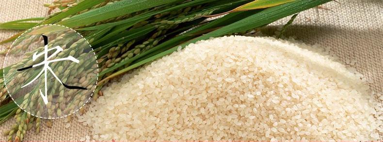 崇明大米将再现升级版 不用化学肥料不施化学农药