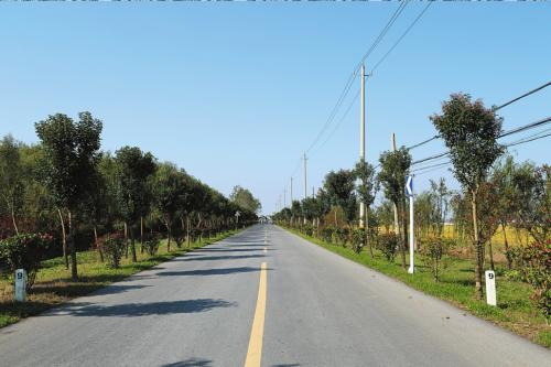 金山农村公路提档升级 朱泾镇金石公路北段将新设路灯