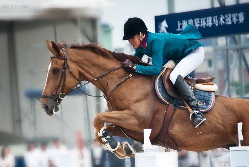 环球马术冠军赛明起举行 100匹欧洲顶级赛马抵沪