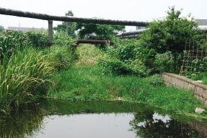 上海今年将打通800条断头河 改造1245个小区雨污混接