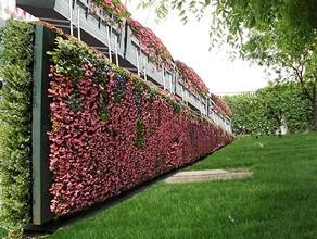 沪立体绿化项目推新技术 三层楼高绿墙不用盆和土